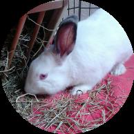 CIRCULOS ADOPCIÓN conejo
