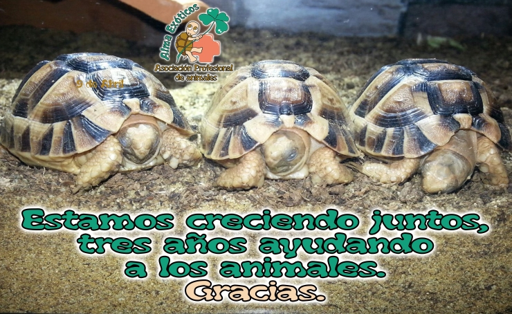 3 tortugas egipcias copia
