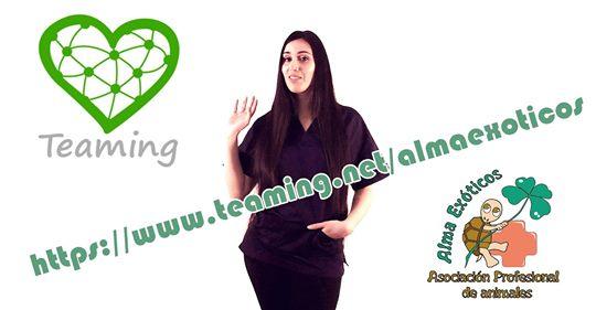 Vídeo Teaming Alma Exóticos